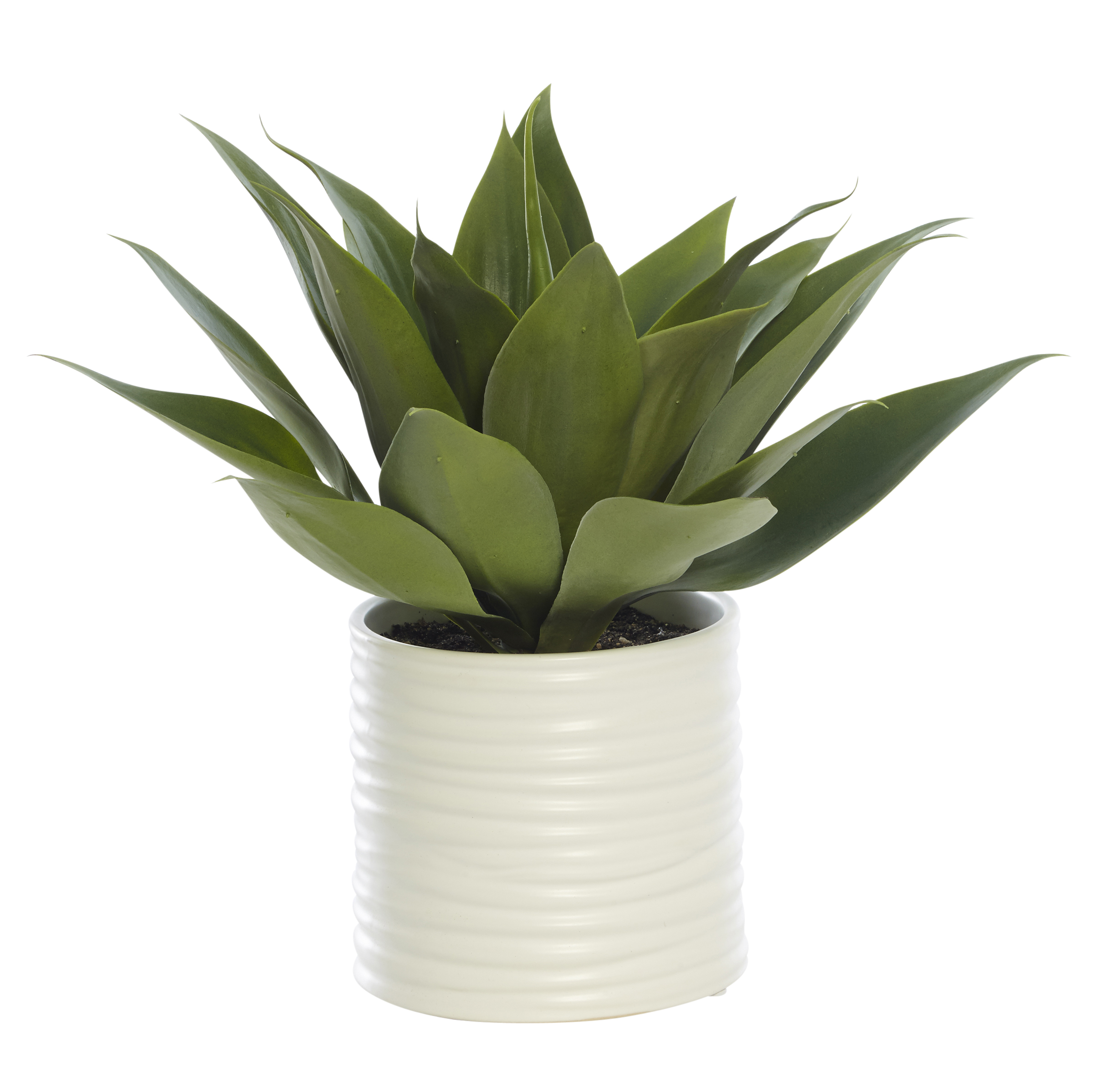 Agave In Small White Cylinder Planter Daydream Leisure